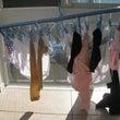 #573 ルルの洗濯…