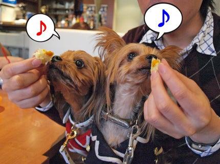 ハマっこヨーキー、うさ耳キュセとたれ耳リュック-5