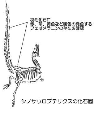 川崎悟司 オフィシャルブログ 古世界の住人 Powered by Ameba-シノサウロプテリクス化石図