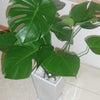 新しい植物♪の画像