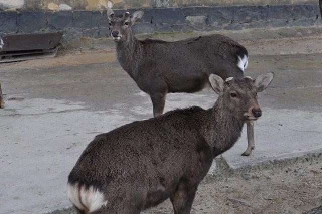 茶々吉とデジ一 のんびり旅-2010/1/31興福寺鹿