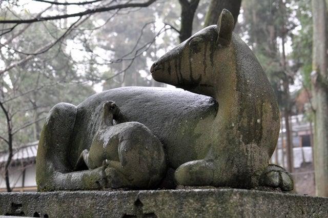 茶々吉とデジ一 のんびり旅-2010/1/31枚岡神社駒鹿