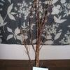 山椒の木の画像