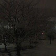 東京の雪…