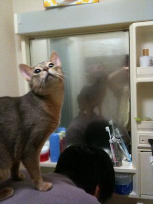 猫とまた旅-100203-2