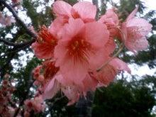 癒しの島沖縄!琉球の優しい香りと極上の手♪うちなぁ~タイム 琉球アロマ月桃(サンニン)