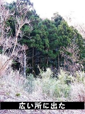 な アルプス デス 危険 と 森