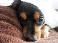 犬ごはん、ときどき飼い主ごはん。-kotette-1
