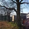 桜並木の画像