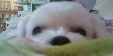 おはYoddy~withマルチーズRICO~-20100119211628.jpg