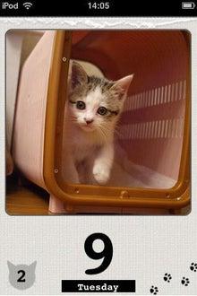 みどりさんのゲームチェック!-cat calender1