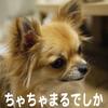 渋谷へGO!の画像