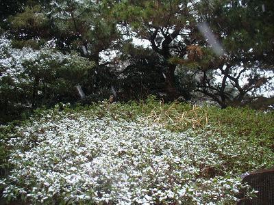 南米で日本犬を探そう! ~ブラジル・サンパウロに暮らす~-雪