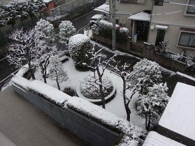 【たんぽぽの惑星】-雪景色