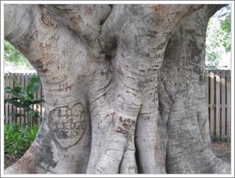 きょんのたわごと-落書木
