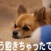飽きっぽい犬の画像