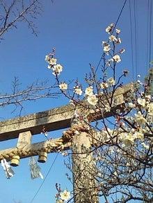 どこまでも遠くへ-古熊神社の梅