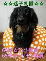 OrangeDays ~蜜柑とMダックス・ミント&シナモンの毎日~