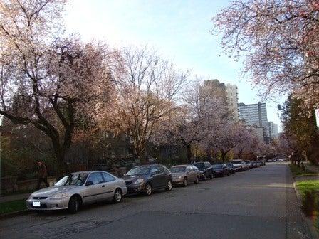 dahliaのブログ-Feb 20'10 ② カナダリア