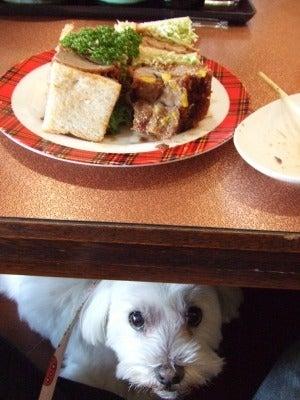 $I love Dog! ~ワンコのおうち探し~