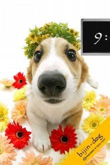 みどりさんのゲームチェック!-bijin dog2