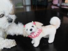 わが愛犬を作りましょう!!?  チェリママのスロー羊毛フェルト作り