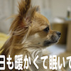 Don't forget!の画像