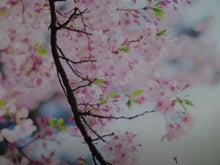 kazaruで彩るartな暮らし  スタッフブログ-SN3J00540002.jpg