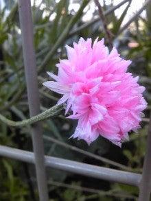 雨坪春菜オフィシャルブログ「春るんルン♪」powered by Ameba-Image1501.jpg