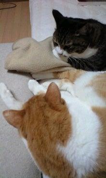 ずれずれブログ…湘南で猫と暮らせば…-100228_2307~0001.jpg