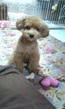 yuimokoさんのブログ-100227_172717.jpg