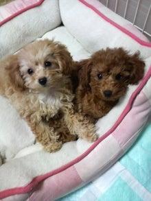 yuimokoさんのブログ-2010030918410001.jpg