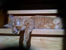 ヒマ猫しま吉の人間観察
