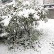 雪とワンごはん☆