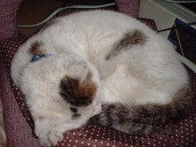 慢性骨髄性白血病の闘病ですが(EARTHと猫も入ってます)