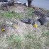 春…3月。の画像