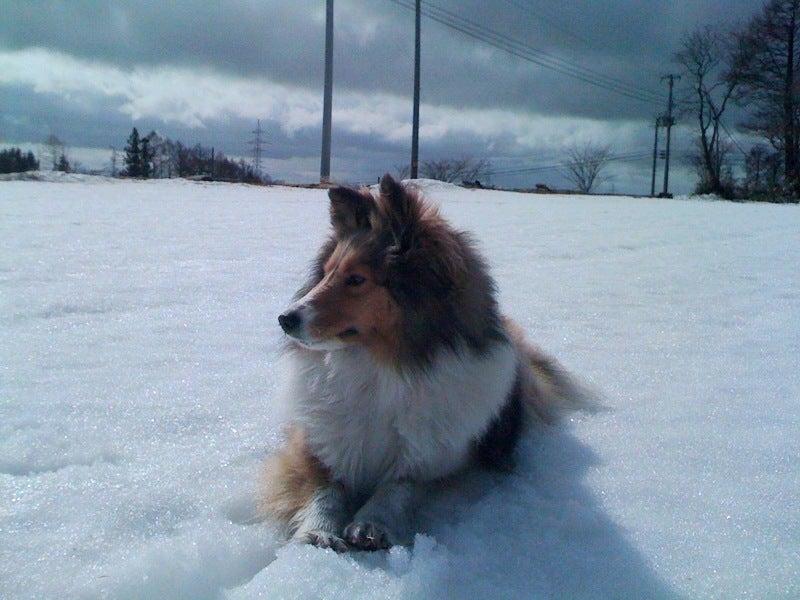 愛犬リーフのボイス、VOICE、ウォイッス!-日差しに照らされ・・