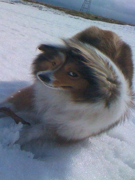 愛犬リーフのボイス、VOICE、ウォイッス!-風がつょい