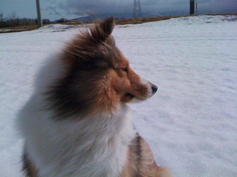 愛犬リーフのボイス、VOICE、ウォイッス!-いい顔ね