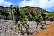$楽園ハワイ通信 by Lani Tours-やしの木