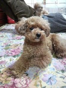 yuimokoさんのブログ-2010031717240000.jpg