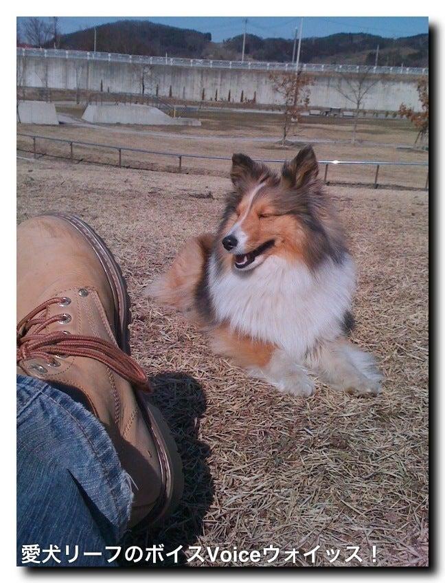 愛犬リーフのボイス、VOICE、ウォイッス!-写真
