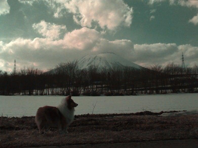 愛犬リーフのボイス、VOICE、ウォイッス!-岩手山