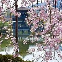 梅と桜 どちらが綺麗だと思う?の記事に添付されている画像
