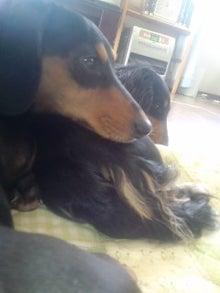 鬱と犬-100317_1257~01.jpg