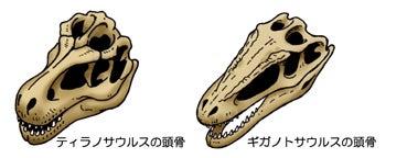 川崎悟司 オフィシャルブログ 古世界の住人 Powered by Ameba-ティラノサウルスとギガノトサウルスの頭骨