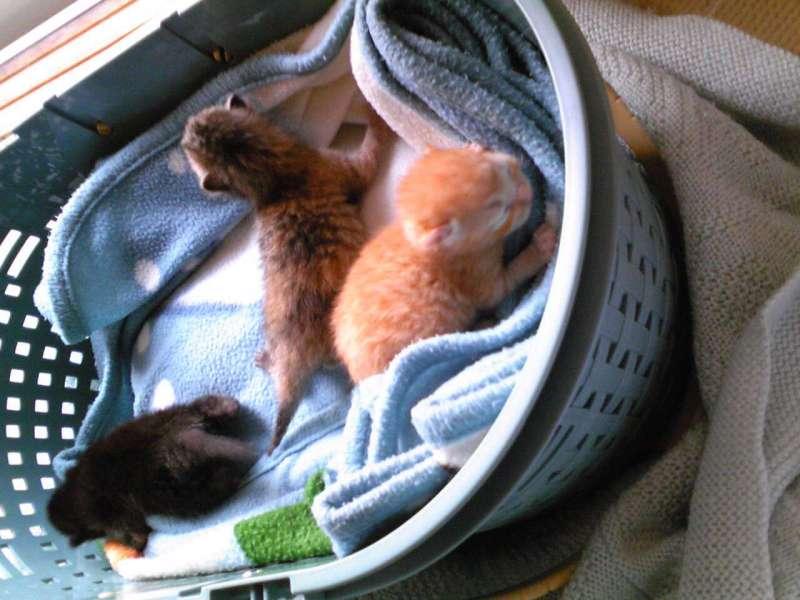 ずれずれブログ…湘南で猫と暮らせば…-100323_0822261.jpg