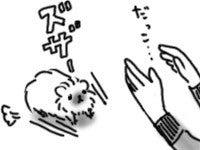 巻き毛ふわふわモルモット-100324_1