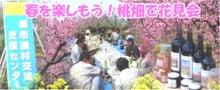 $山梨の桃、ぶどう畑でグルメ三昧 あなたも産地直送でお取り寄せ。-山梨の桃畑でお花見会
