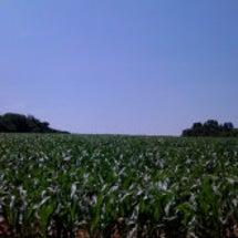 コーン畑と青空とMa…